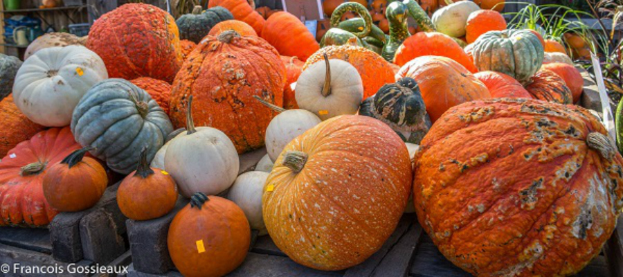 3 Pumpkin-y Ideas to Increase Customer Loyalty
